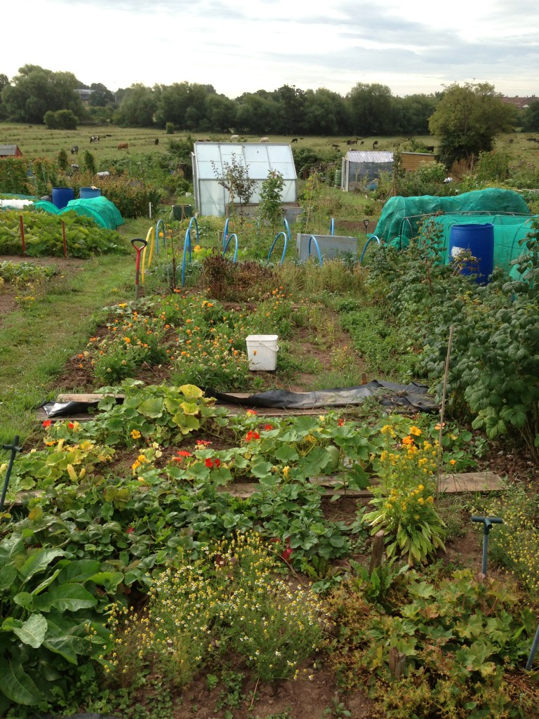 Allotment overview