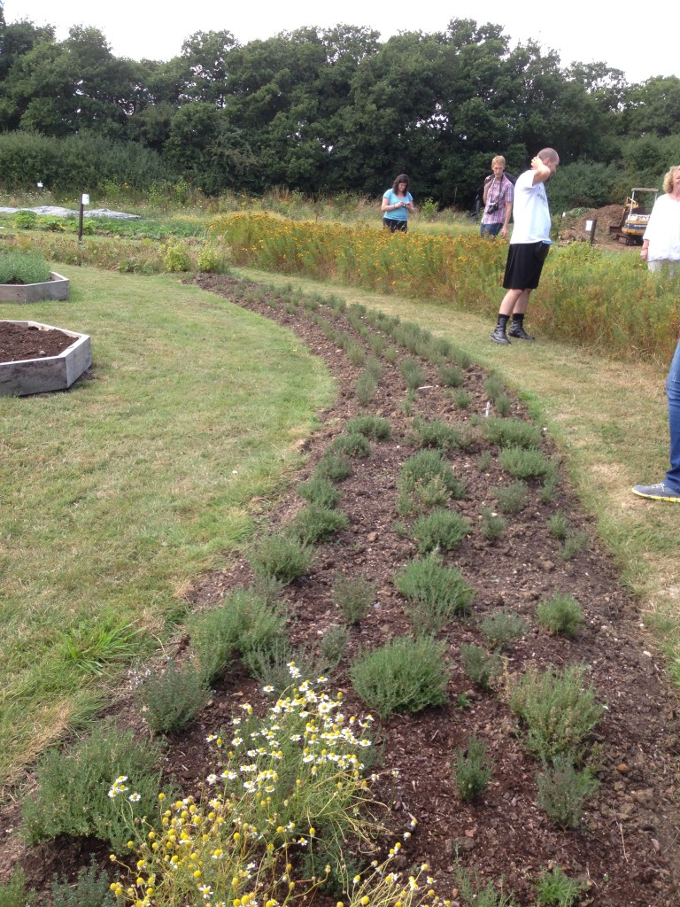 Neat herb beds in circles. There's Steve in his kilt...